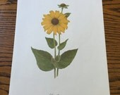Vintage Color Lithograph Print- Sunflower- Wildflower Series