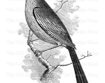 Bird Clip Art Vintage Printable Mockingbird Digital Download Transfer Image PNG JPG