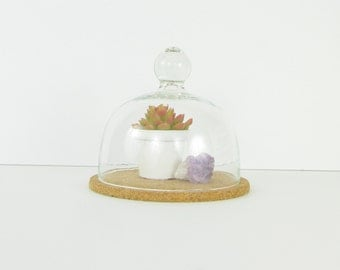 Vintage Glass Dome Cloche - Terrarium Display