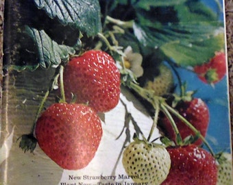 Sunset Magazine September 1971, strawberry plants, Pike's Place Market, green tomato pie, Mugho pines, chestnut trees, Mexican patio party