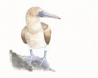 Blue Footed Booby, 8x10 watercolor painting, birds, art & collectibles earthspalette