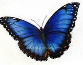 5X7 Art Print - Blue Morpho