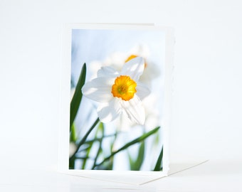 Spring Flower Cards, White Yellow Daffodils Cards, Blank Photo Greeting Cards, Flower Cards, Jonquils, Nature Photography Cards Sets