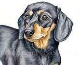Dachshund Print, Short Haired Black and Tan Dachshund Watercolour