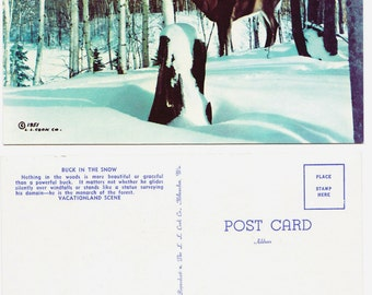 Snow Buck Postcard - Vacationland North Woods Winter - NOS Cook 1951
