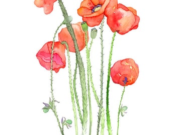 Poppies No.1, Archival Print, you choose size