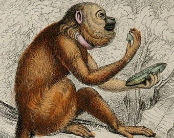 1833 Antique print of a NORTHERN BROWN HOWLER Monkey from Brazil. Monkeys. Apes. Primates. Natural History. 182 years old engraving.