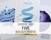 Choose Any 5 Biology Prints