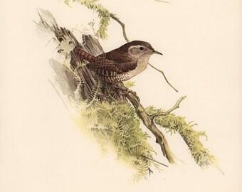 JF Lansdowne Print Book Plate Art, Winter Wren