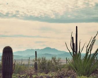 Desert Wandering - southwest art, Arizona photography, cactus, Southwestern decor, fine art photograph, vintage photography