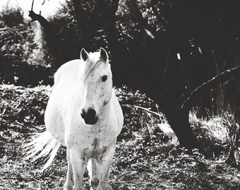 Black and White Horse Photography,White Horse Photography,Horse Print,Horse Art,White Horse,Camargue Horse,black and white photo,horse print