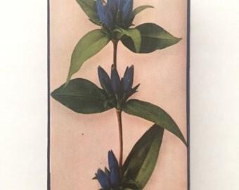 Blue Flora Altered Matchbox