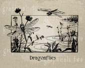 Dragonfly Insect Pond black white Instant digital download graphic image for iron on fabric transfer burlap decoupage pillow card No gt124