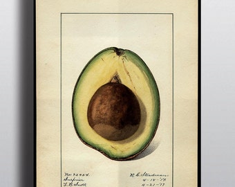 Antique Avocado Print Avocado Art Poster Prints Art Print Wall Decor Wall Art Kitchen Wall Decor Fruit Print Guacamole