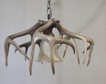 "Whitetail Deer Antler Pendant Light Fixture (11-12"" H x 15-17"" W)"