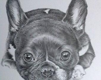 Custom Dog Portrait Example - Pet Portrait - Graphite - Pet Commissions - Christmas Gift