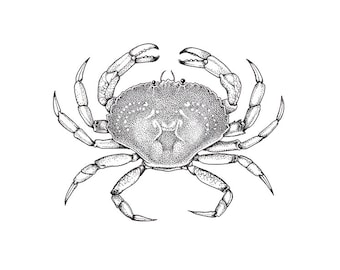 Print of original Rock Crab illustration