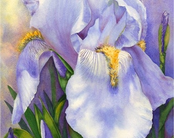 Grand Old Flag Iris - Giclee Print by Karen Frattali