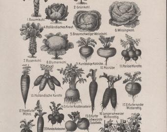 1910 Vegetables Antique Print, Vintage Jugendstil Lithograph, Old Medical Book Illustration, Root Vegetables, Carrot, Beetroot, Cabbage