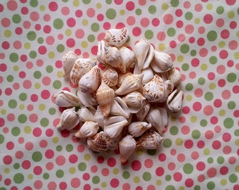 Lot of 36 Seashells Beach Decor - 2 inch
