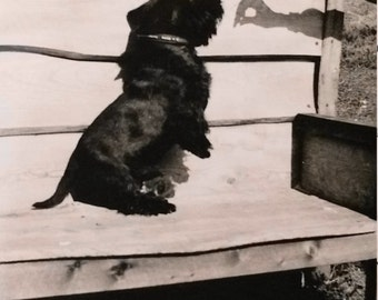 Vintage Photo..Time for Treats 1950's, Original Photo, Old Photo Snapshot, Vernacular Photography, American Social History Photo