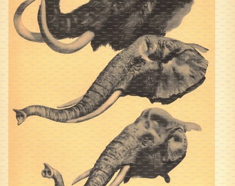 Prehistoric Creature Book Print. Mammoth. Woolly Mammoth. 1965.