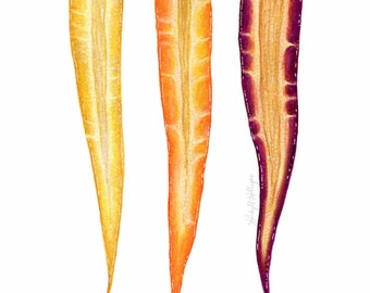 Rainbow Carrot Trio // Food Illustration //  Art Print, spring, vegetables, botanical, farmhouse, rustic