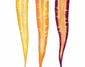 Rainbow Carrot Trio // Food Illustration // Archival Art Print, spring, vegetables, botanical, farmhouse, rustic