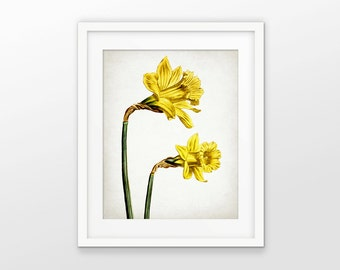 Daffodil Flower Art Print - Daffodil Plant Decor - Botanical Print - Yellow Flower Decor - Single Print #1767 - INSTANT DOWNLOAD