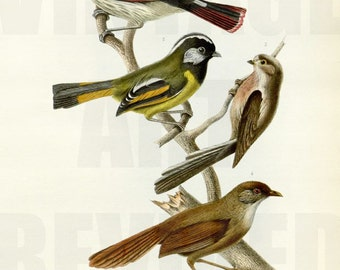 Collection of Birds on Tree Branch Graphic - High Resolution Digital Download No.704