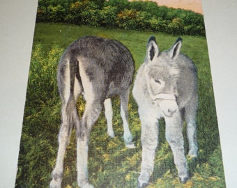 A Texas Burro-ess and her Baby , Donkey Unused Vintage Linen Postcard