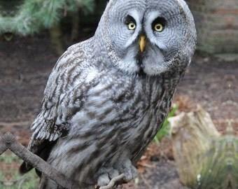 Owl Digital Downloadable V1