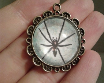Real Spider Photo Pendant in Antique Vintage Brass Bronze Round Cameo