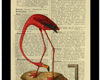 Flamingo Spies a Periscope Curiosity - Dictionary Print Book Page Art