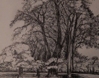Trees - Original Pen and Ink