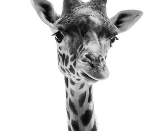Animal Photography - Giraffe Photo Black and White, 24x36 20x30 16x20 8x10 5x7 fine art wall decor, nursery wall art, grey animal portrait