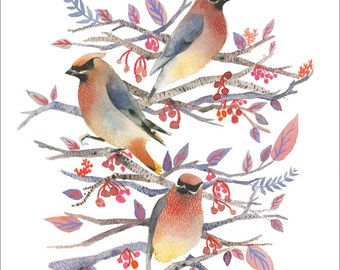 bird watercolor, bird painting, bird art print, Cedar Waxwings - Print of Original Watercolor