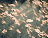 Gentle Breeze - field of daisies in dreamy light, soft peach flowers, spring and summer wall decor, floral art photography, fine art print