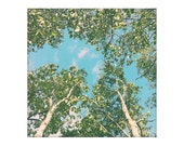 Nature photography, birch tree art, retro tree photography print, forest canopy art, fine art print, peaceful art Birch Life 8x8 10x10 12x12