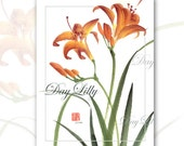 Day Lilly- Watercolor Brush Painting with Calligraphy