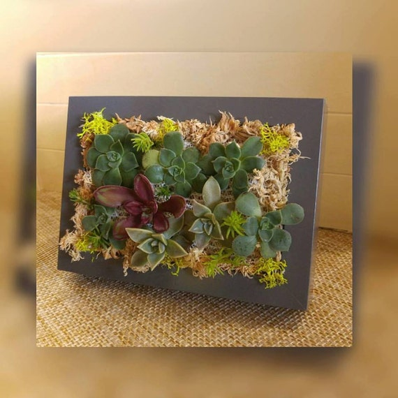 Living succulents wall vertical garden small by for Indoor succulent wall