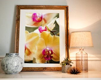 Fine Art Print - Floral Photography - Home Decor