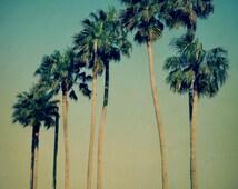 Sun Photography, Palm Tree Sun, Palm Tree Download, Palm Trees Photo, Printable Palm Tree, California Palm Tree, Digital Palm Tree, Download