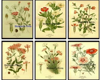 """Set of Six Flower prints from the 1800's  Plates 39,40,41,42,44,45  (Prints are 8"""" x 10"""")"""