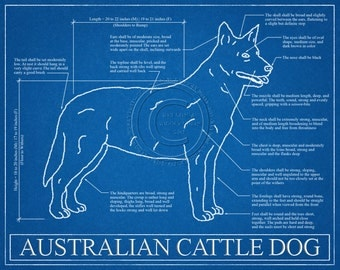 Australian Cattle Dog Blueprint Elevation / Australian Cattle Dog Art / Australian Cattle Dog Wall Art / Australian Cattle Dog Gift