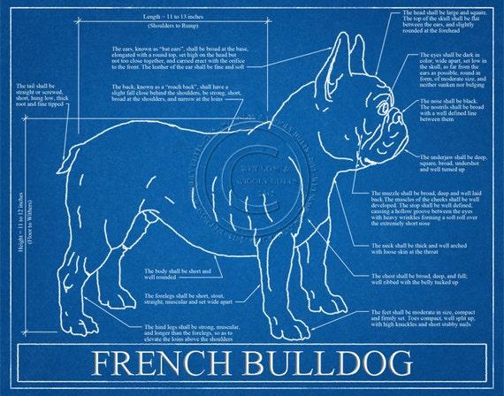 French bulldog blueprint elevation french bulldog art like this item malvernweather Images