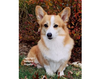 Corgi Dog Flag, Pembroke Welsh Corgi Flag, Corgi Gifts, Corgi Art