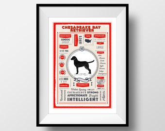 Chesapeake Bay Retriever Breed Poster, Vintage Style, Dog Infographic Print, Chesapeake Bay Retriever Lover Gift, Letterbox Red/Sea Green