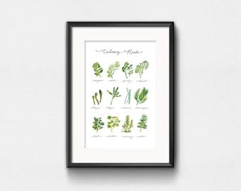 Culinary Herbs Art Print | Watercolor Plants | Infographic Herbs Chart | Wall Decor | Hand Lettering | 8x10 | 11x14 | 13x19