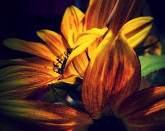 Sunflower photo blank card